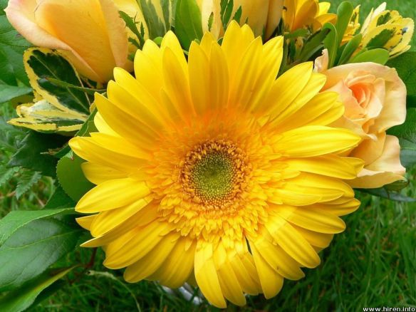 big-yellow-flower-1u-1